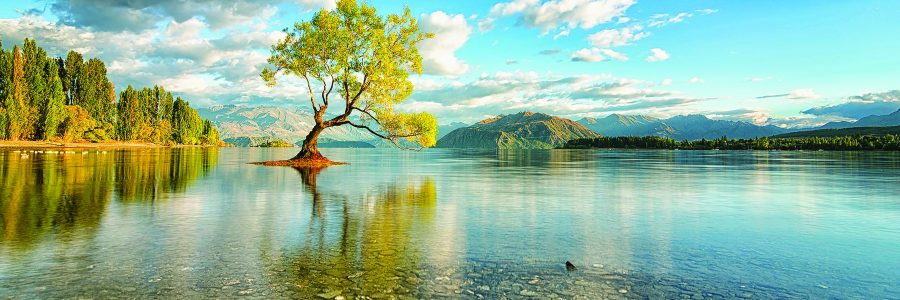 World___New_Zealand_The_tree_in_the_middle_of_the_lake_in_New_Zealand_106404_