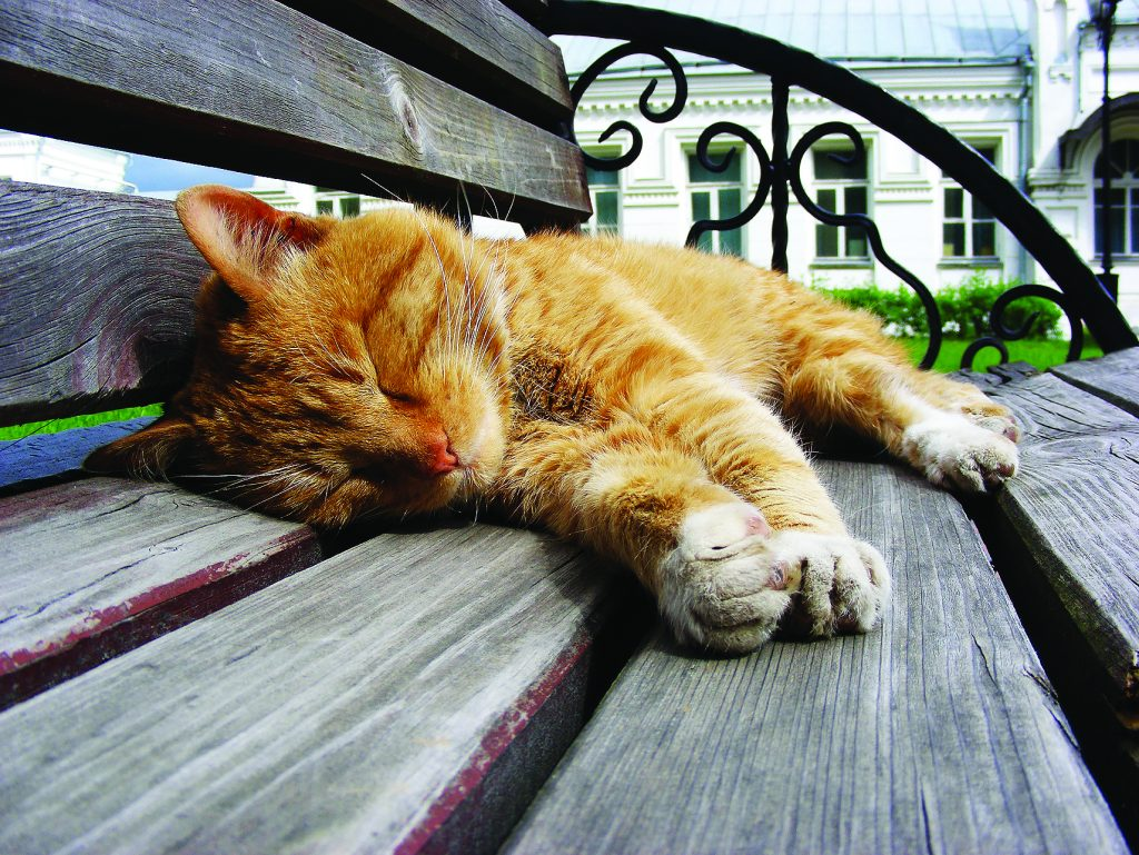 Рыжий кот спит на скамейке в монастыре